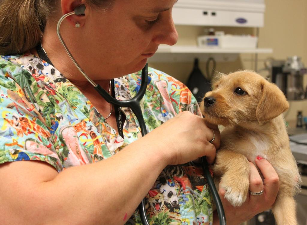 Dr. Gary Weitzman –Saving Animals in San Diego County (Gallery Format)